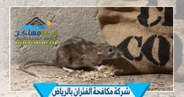شركة مكافحة فئران في الرياض